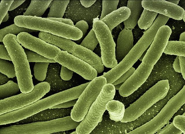 Los aditivos antibacterianos y sus usos