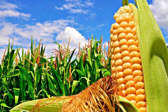 Conoce todo lo que debes saber para hacer buen trading en cultivos rentables